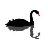 Illustration des schwarzen Schwans lizenzfreie abbildung