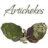Illustration des Veggies savoureux Artichauts de vecteur illustration de vecteur