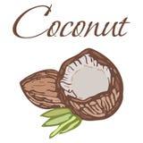 Illustration des Veggies savoureux Noix de coco de vecteur illustration libre de droits