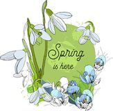Illustration of Design banner with spring is here logo. Card for spring season with First spring flowers. Graphic. Vector illustration of Design banner with Stock Image