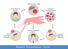 Illustration, die Malariagetriebezyklus zeigt Lizenzfreie Stockfotos