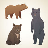 Illustration with different bears  on white background. Vector cartoon broun and black bear Stock Photography