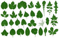 Illustration of different leaves. Isolated on white Royalty Free Stock Image