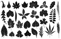 Illustration of different leaves Stock Images