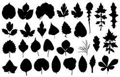 Illustration of different leaves. Isolated on white Stock Photos