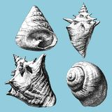 Illustration with different realistic shells Stock Photography