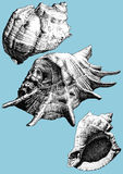 Illustration with different realistic shells Stock Image