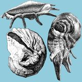 Illustration with different realistic shells Royalty Free Stock Images