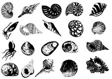Illustration of different  sea  shells Stock Images