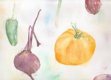 Illustration of different vegetables. Original watercolour illustration of different vegetables Royalty Free Stock Photos