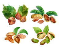 Illustration with different  watercolor nuts. Watercolor illustration with different nuts  on white Stock Photos