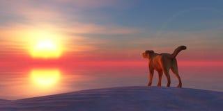 illustration dog on the beach and sunset Stock Photos
