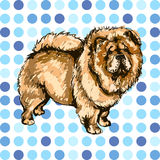 Illustration of the dog breed Chow Chow. On colorful background Stock Images