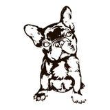 Illustration of dog breed French bulldog. Vector black and white illustration of dog breed french bulldog isolated on white background Royalty Free Stock Photo