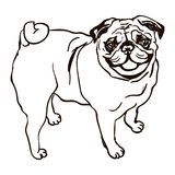 Illustration of dog breed Pug. Vector black and white illustration of dog breed pug isolated on white background Stock Image