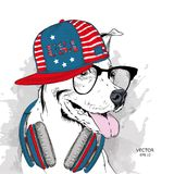 Illustration of dog in the glasses, headphones and in hip-hop hat with print of USA. Vector illustration. Illustration of dog in the glasses, headphones and in Royalty Free Stock Photos