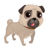 Illustration of dog pug breed. Vector portrait of pug dog. Pug of cartoon style Vector Illustration