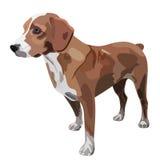 Illustration of dog. On white background Stock Image