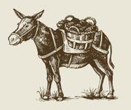 Illustration of a donkey. Vector vintage hand drawn illustration of a donkey Royalty Free Stock Photography
