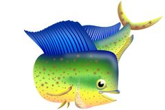 Illustration of dorado fish. Colored  illustration of dorado fish on a white Royalty Free Stock Photography