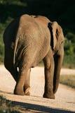Illustration drôle d'éléphant Photos libres de droits