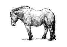 Illustration of  draught horse Royalty Free Stock Photo