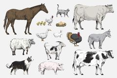 Illustration drawing style of animal collection Royalty Free Stock Photo