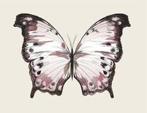 Illustration drawing style of butterfly stock illustration