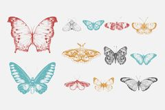 Illustration drawing style of butterfly collection stock illustration