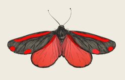 Illustration drawing style of butterfly vector illustration