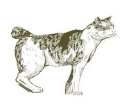 Illustration drawing style of cat Royalty Free Stock Photography