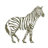 Illustration drawing style of zebra Royalty Free Stock Photography