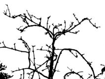 illustration of a dry branch on a white background stock illustration