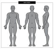 Illustration du corps des hommes illustration stock