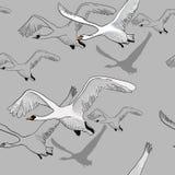 Illustration du modèle sans couture des cygnes blancs de dessin de vol Tiré par la main, conception graphique de griffonnage avec Image libre de droits