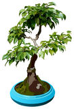 Illustration of dwarf tree. The vector illustration of bonsai tree Royalty Free Stock Photo