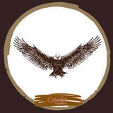 Illustration of eagle, hawk bird Royalty Free Stock Images