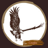Illustration of eagle, hawk bird Stock Photos