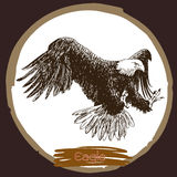 Illustration of eagle, hawk bird Royalty Free Stock Photos