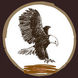 Illustration of eagle, hawk bird Stock Photo
