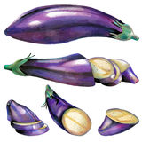 Illustration with eggplant Stock Images