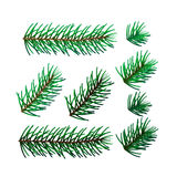 Illustration of eight spruce twigs Stock Photos
