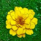 Illustration einer alleinen Ringelblume in voller Blüte stock abbildung