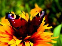 Illustration einer Neonblume mit einem Schmetterling Stockfotos