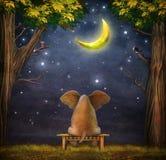 Illustration eines Elefanten auf einer Bank im Nachtwald Stockfotos