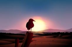 Ein Sonnenuntergang in der Wüste mit einem Vogel an einer Niederlassung eines Baums Stockfotografie
