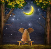 Illustration of a elephant on a bench in  night forest Stock Photos