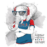 Illustration of elephant dressed up in the glasses  Stock Image