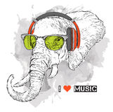 Illustration of elephant hipster dressed up in t-shirt, pants and  in the glasses and headphones. Vector illustration. Stock Image