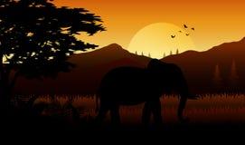 Elephant silhoette at savanah on sutset
